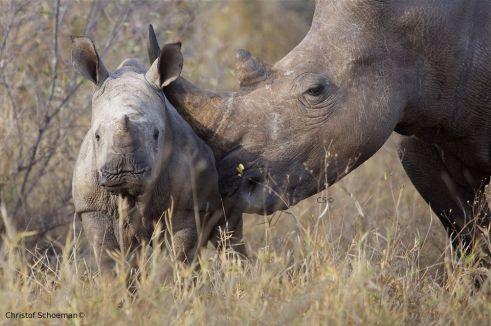 rhino closeness christof schoeman
