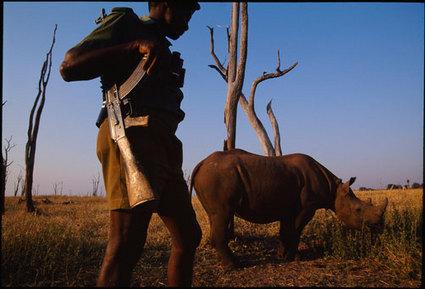 rhino ranger 2