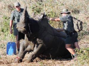 rhino saving boy 2