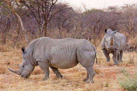rhinos unknown