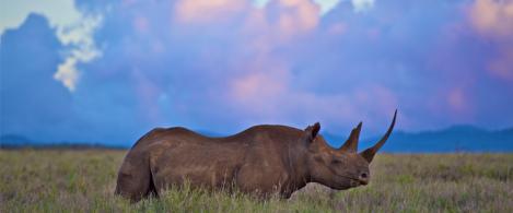 lewa rhino