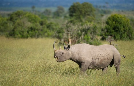 OPC rhino by safaribookings