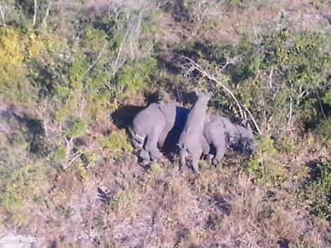 rhino mom poached with baby near