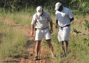 Rangers tracking wildlife for guests in Londolozi. photo: Eric Leininger