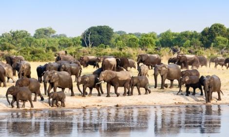 Zimbabwe elephant herd
