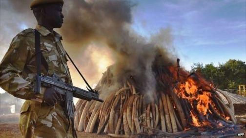 kenya ivory burn bbc