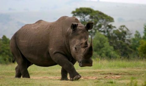 kratos rhino
