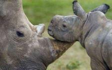 mom and baby rhino 1
