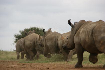 White rhino option trade
