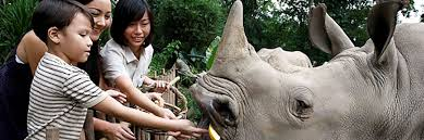vietnam feeding rhinos breaking the brand
