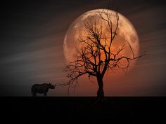 full moon rhino