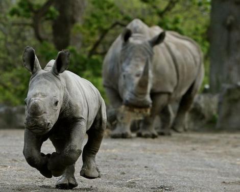Dublin rhinos