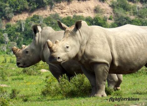 ffr rhinos