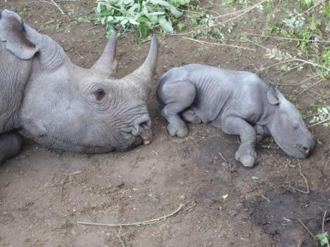 Mabuya and baby