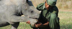 Ranger holding baby rhino foot