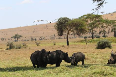 white and black meet at lewa april 2016 4