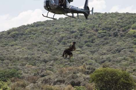 dog propeling from copter by paramount group