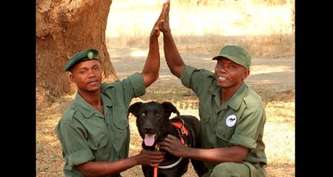 shelter dog helps rangers