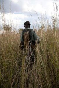 ranger in tall grass