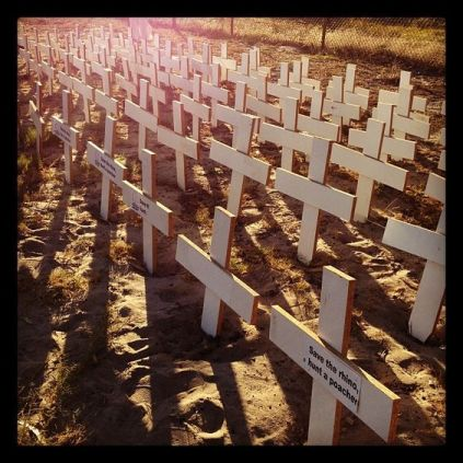 planting-crosses-for-fallen-rhinos-in-sa