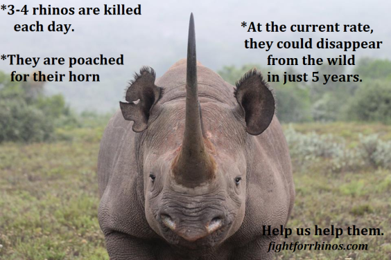 rhino-facts