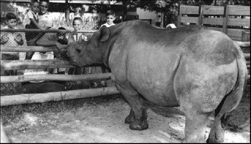 cacareco-rhino-by-gina-famania