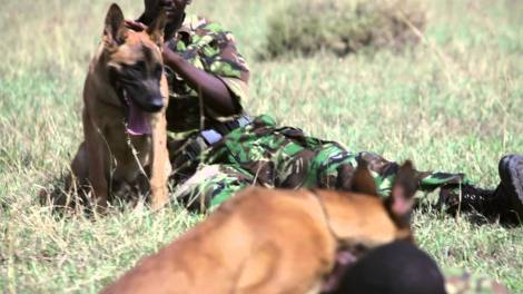 ol-pejeta-dog-and-ranger