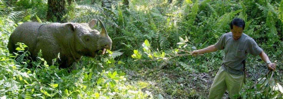 borneo-rhino-via-borneorhinoalliance
