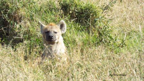 hyena-ffr