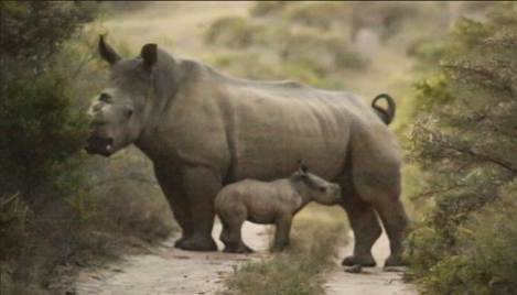 thandi-and-new-baby-jan-2017